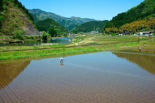 田植え 長良川河畔の写真素材 [FYI03930707]
