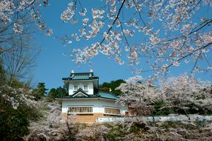 桜咲く小倉公園(小倉山城)の写真素材 [FYI03930745]