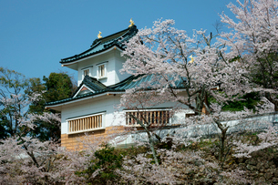 桜咲く小倉公園(小倉山城)の写真素材 [FYI03930746]