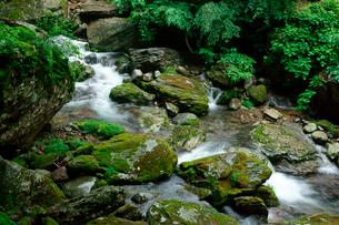渓流(夫婦滝 の下流・長良川源流)の写真素材 [FYI03930776]