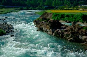 長良川・急流の写真素材 [FYI03930804]