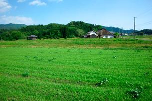 牧草と茅葺民家の写真素材 [FYI03930831]