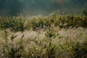 朝露の秋草の写真素材 [FYI03930848]