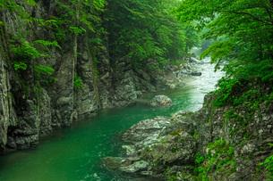カワサツキ咲く馬瀬川の写真素材 [FYI03930867]