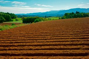 だいこん畑と山並み ひるがの高原の写真素材 [FYI03930875]