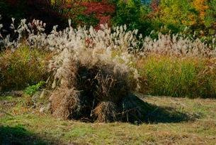 干し草とススキの写真素材 [FYI03930891]