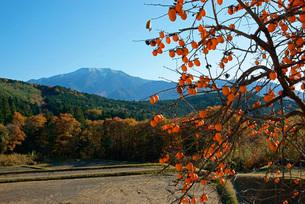 柿と恵那山の写真素材 [FYI03930897]