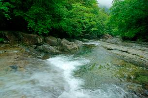 片知渓谷(かたぢけいこく) 千畳岩から下流を望む の写真素材 [FYI03930919]
