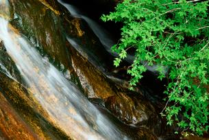 乳岩峡・新緑と乳岩川の滝 の写真素材 [FYI03930925]