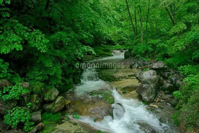 叺谷・長良川の源流 の写真素材 [FYI03930930]