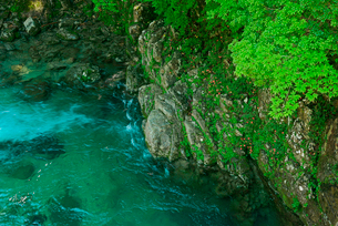 新緑と淵 付知川・付知峡の写真素材 [FYI03930947]