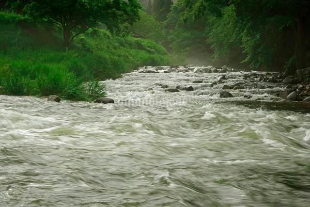 長良川(手前)の流れ 切立川(正面奥)との合流点  の写真素材 [FYI03930970]