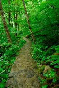 巌立峡(がんだてきょう) 緑の滝見遊歩道 の写真素材 [FYI03930975]