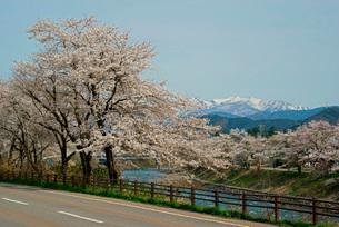 桜と長良川 大日岳遠望 の写真素材 [FYI03930987]
