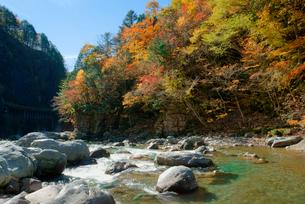 紅葉・馬瀬川,の写真素材 [FYI03931005]