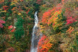上臈ヶ滝(じょうろうがたき)・中津川,の写真素材 [FYI03931021]