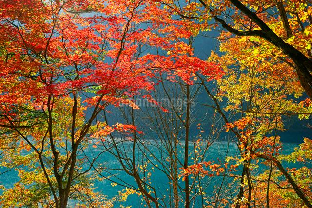 紅葉・御岳湖(牧尾ダム湖),の写真素材 [FYI03931063]