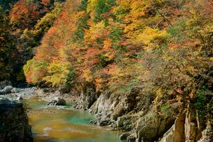 紅葉・馬瀬川,の写真素材 [FYI03931125]