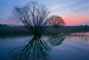 夜明け,揖斐川の写真素材 [FYI03931135]
