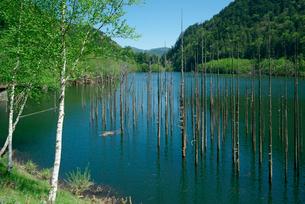 御岳自然湖,王滝川の写真素材 [FYI03931179]