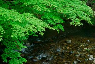 荒川と新緑の写真素材 [FYI03931221]