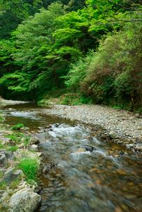荒川と新緑の写真素材 [FYI03931222]