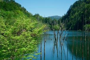 御岳自然湖,王滝川の写真素材 [FYI03931240]