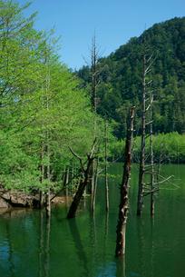 御岳自然湖,王滝川の写真素材 [FYI03931241]