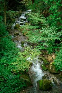 楢木谷 板取川上流の写真素材 [FYI03931257]