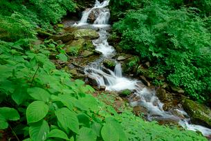 渓流 清滝の下流の写真素材 [FYI03931274]