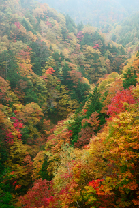 飛騨川の紅葉 戸沢谷橋より下流を望むの写真素材 [FYI03931280]