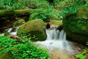 水木沢・木曽川の源流 水木沢天然林の写真素材 [FYI03931288]