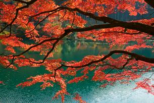 下原ダム湖 湖畔の紅葉 飛騨川の写真素材 [FYI03931300]