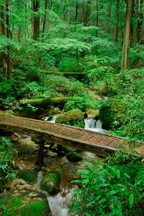 水木沢 木曽川の源流 水木沢天然林の写真素材 [FYI03931315]