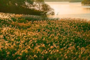 ススキと多度川   揖斐川との合流点の写真素材 [FYI03931364]