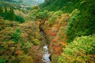 飛騨川の紅葉 下之向橋より下流を望むの写真素材 [FYI03931365]