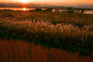 長良川 ススキの河川敷の写真素材 [FYI03931380]