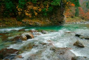 付知峡の紅葉 付知川 いわなの里峡付近の写真素材 [FYI03931404]