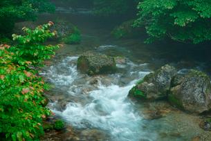 円原川の伏流水 湧水の里の写真素材 [FYI03931405]