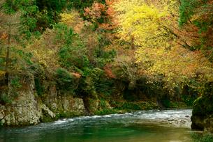付知川の黄葉の写真素材 [FYI03931406]