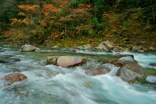 付知峡の紅葉 付知川 いわなの里峡付近の写真素材 [FYI03931407]