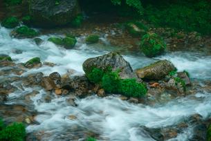 円原川の伏流水 湧水の里の写真素材 [FYI03931410]