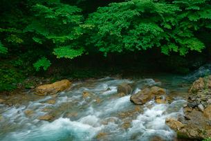 根尾東谷川の写真素材 [FYI03931425]