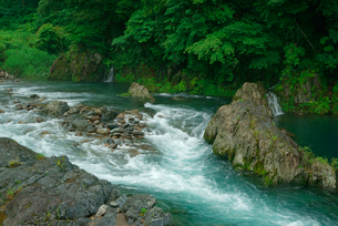 根尾西谷川の写真素材 [FYI03931426]