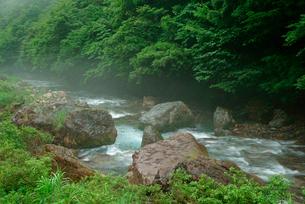根尾東谷川の写真素材 [FYI03931428]