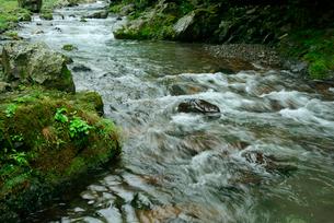 長谷川 粕川の支流の写真素材 [FYI03931442]