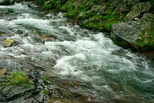 長谷川 粕川の支流の写真素材 [FYI03931443]