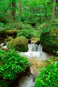 水木沢・木曽川の源流 水木沢天然林の写真素材 [FYI03931452]