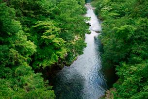 新緑の吉田川・下流を望む の写真素材 [FYI03931473]