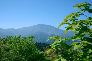 朴ノ木の葉と恵那山の写真素材 [FYI03931495]